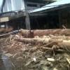 Foto : Pasca Banjir Tahuna
