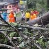 Pohon Tumbang , Jalan Raya Tomohon-Manado sempat Ditutup